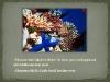 slide-030-001